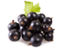 tag Blueberries icon