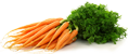 tag Carrot icon
